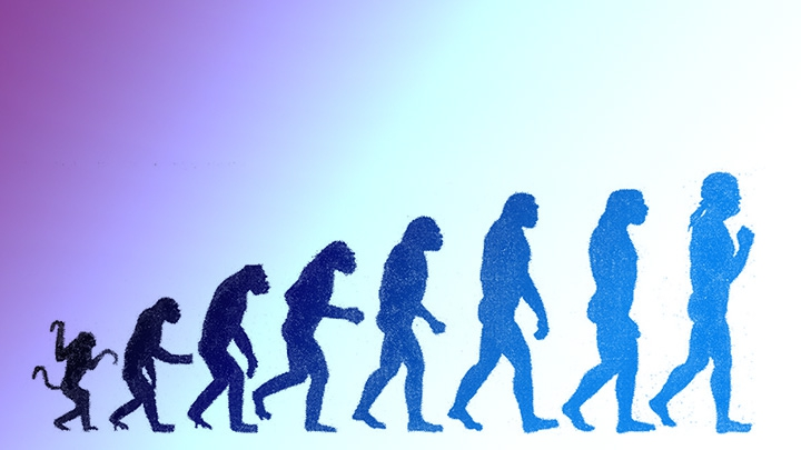 Upright Walking Hominids