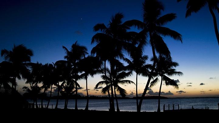 tropical nights