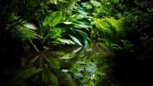 jungle climate