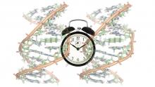 DNA longevity