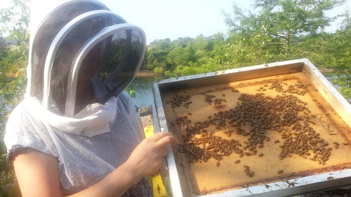 Lewis Ginteru0027s Kristi Orcutt, A Beekeeper And Instructor, Lifts Off The Top  Of A Hive.