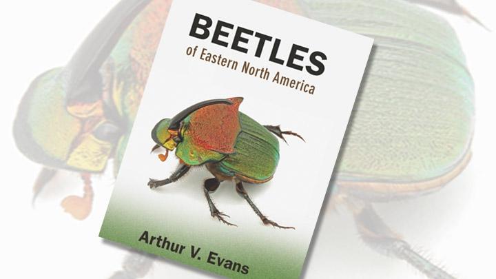 Beetles of Eastern North America