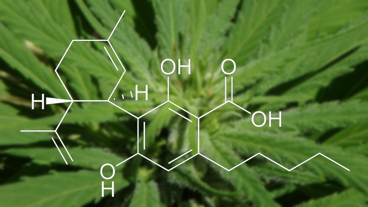 Cannabidiol extract