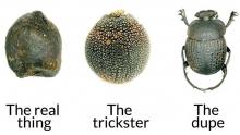 Fecal Mimicry