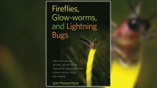 Field Guide to Fireflies