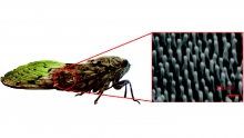 Insect Wing Nano Structures