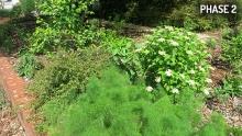 phase 2 garden plants